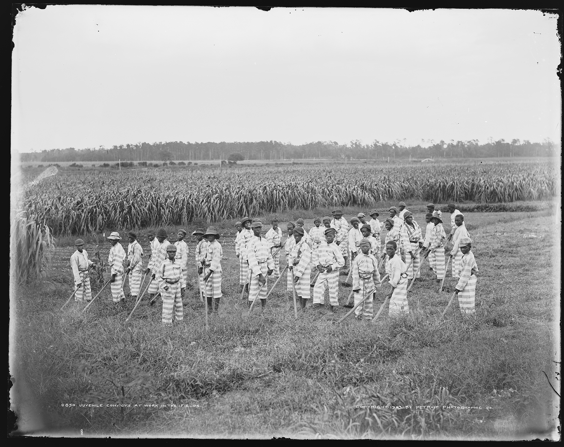 "Children who were orphaned, removed from negligent parents, or who were juvenile offenders were especially vulnerable after emancipation. They could end up in the convict leasing system as ""'apprentices"" and fall once more into white planters' hands. Unknown location, ca. 1903. (Detroit Publishing Company Collection, Library of Congress)"